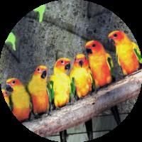 Birds HZ