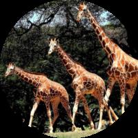 Honolulu Zoo Instagram