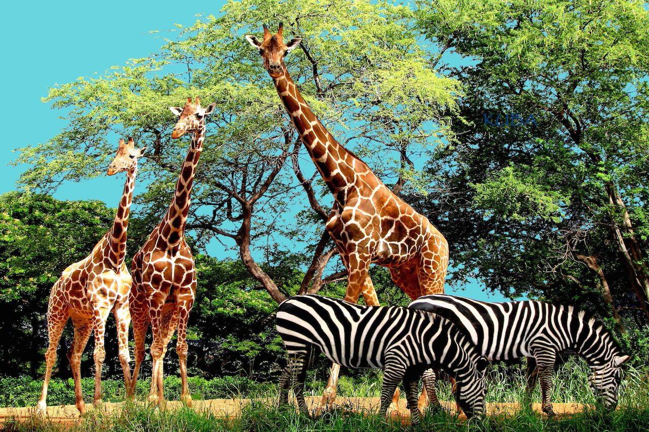 Zoo etiquette